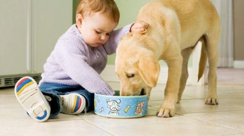 лекарства от глистов кошкам и собакам