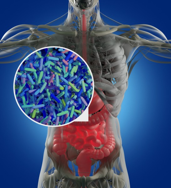 intestinal bacteria in treatment of behcet s disease bd Intestinal behçet's disease is a rare, immune-mediated chronic intestinal inflammatory disease therefore, clinical trials to optimize the management and treatment of patients are scarce.